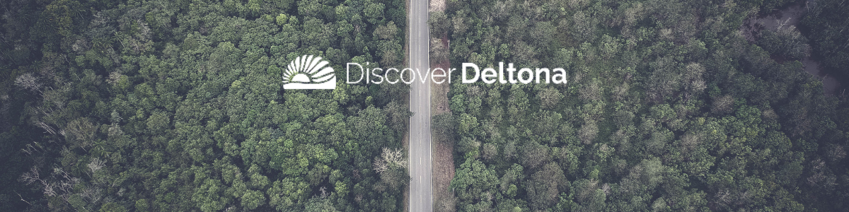 Deltona forest with road